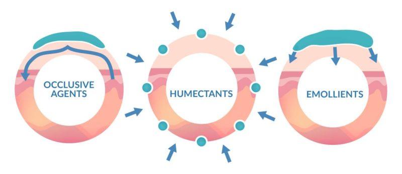 các thành phần cơ bản không thể thiếu trong sản phẩm dưỡng ẩm